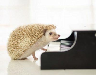 子供のピアノ教室の選び方は!いつからどれくらいで上達できる?
