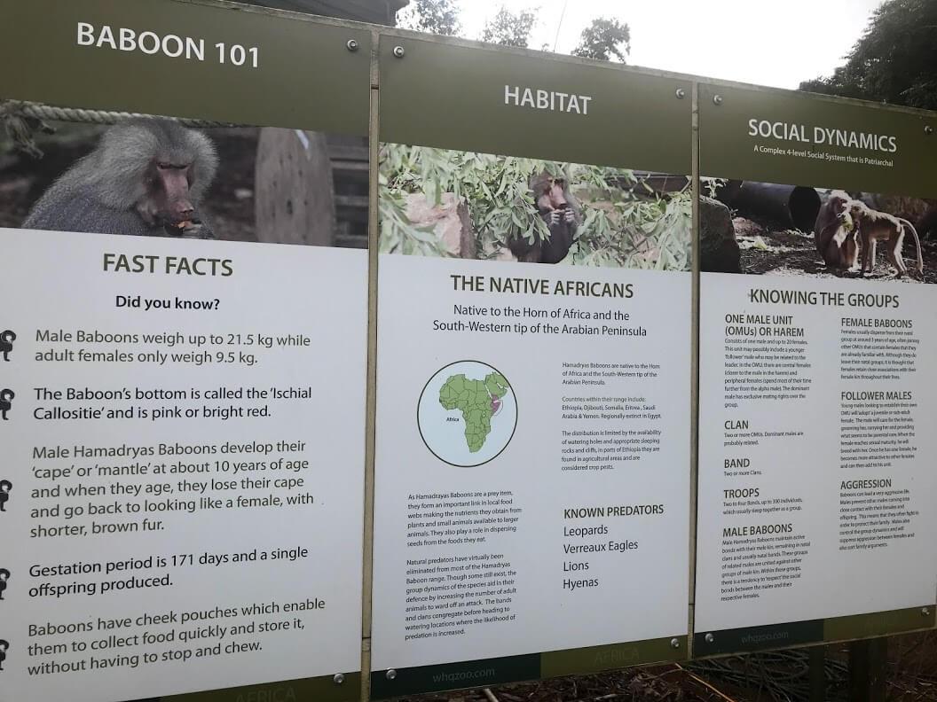 WILDLIFE HQ 園内の動物 【Baboon】について学べる詳細