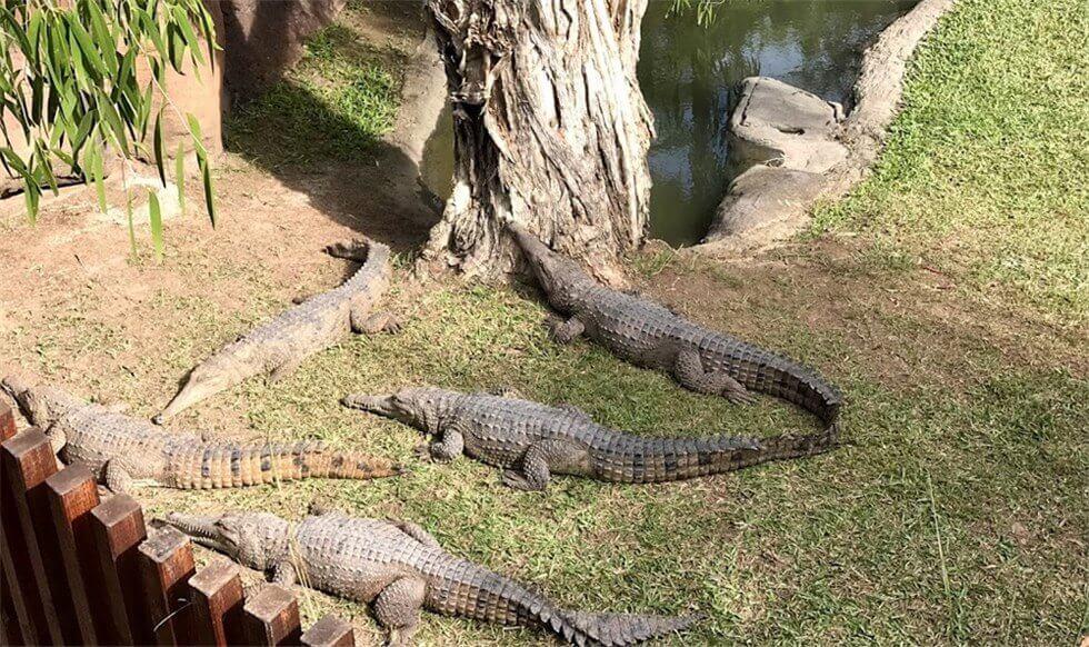 Australia Zoo に入園して直ぐの場所にある『Alligator』を撮った時の写真