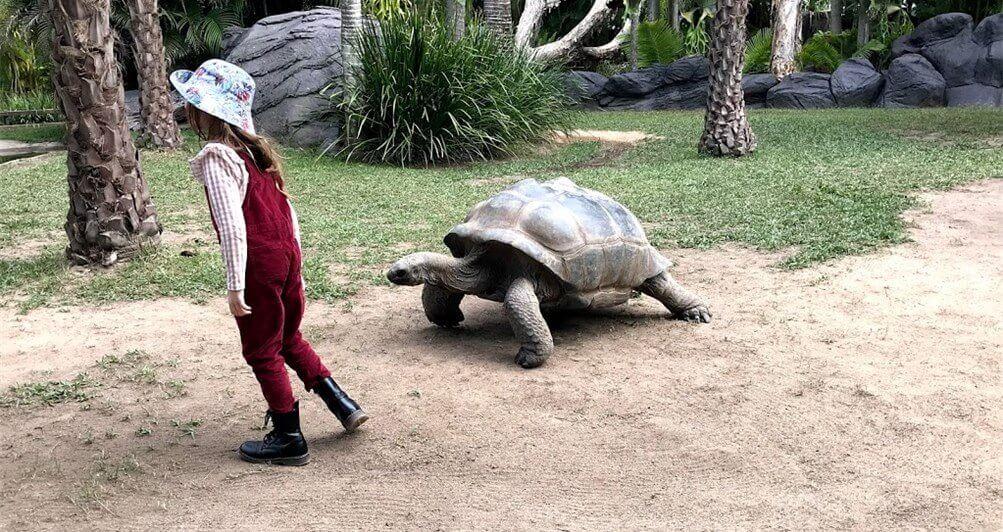 Australia Zoo にいた アルダブラゾウガメを撮った写真