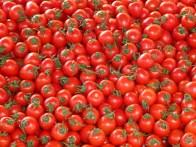 tomatoes-73913_960_720