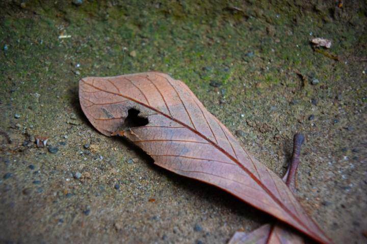 ハートマークのある枯葉