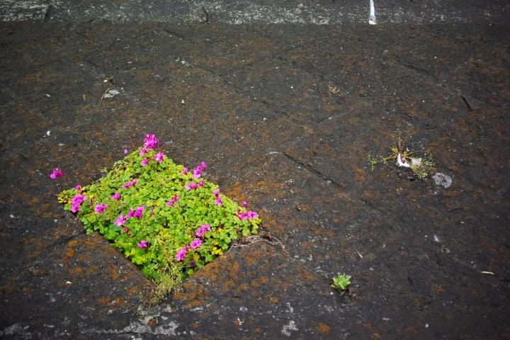 花が咲く河原のブロック