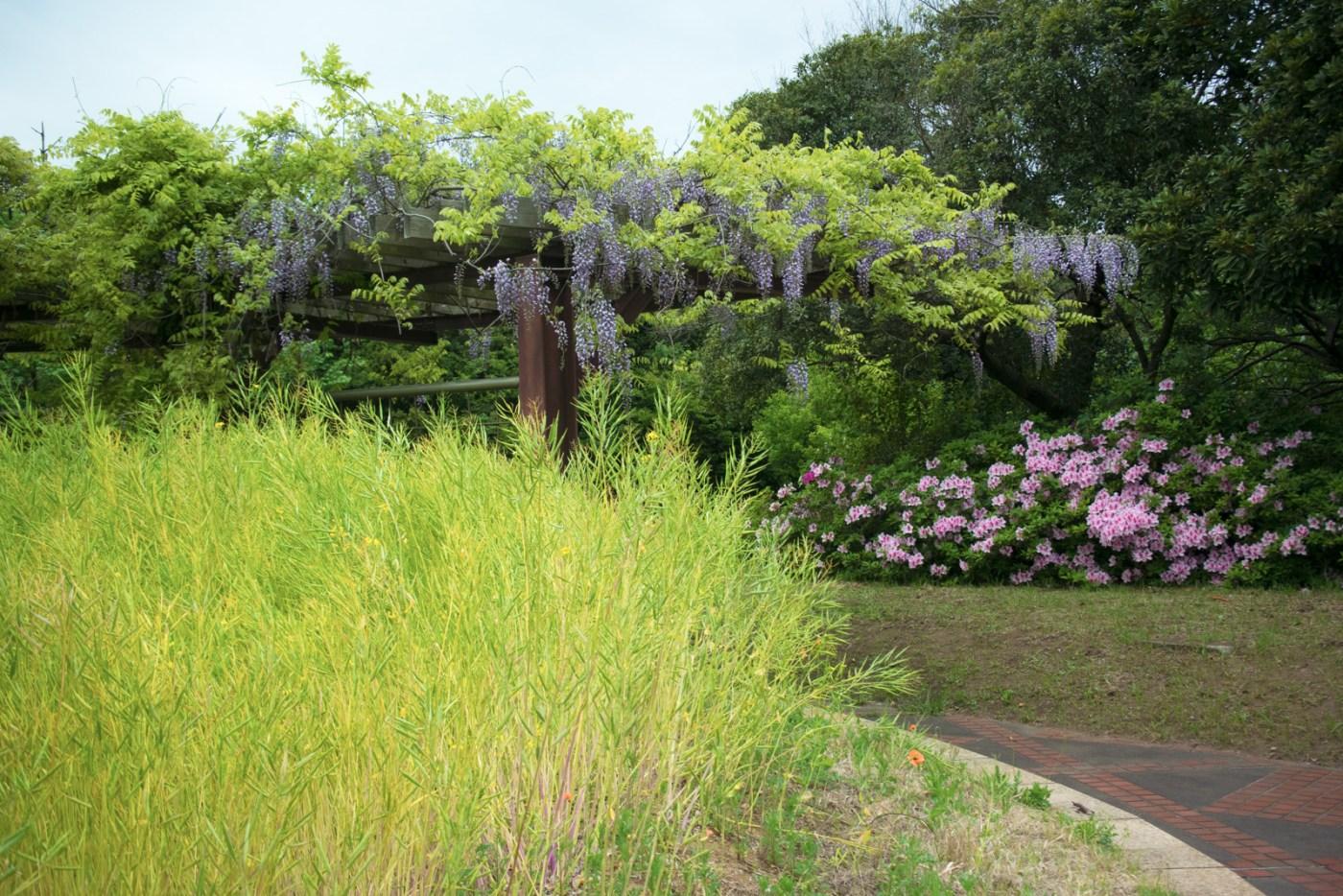 富津市 市民ふれあい公園 花々