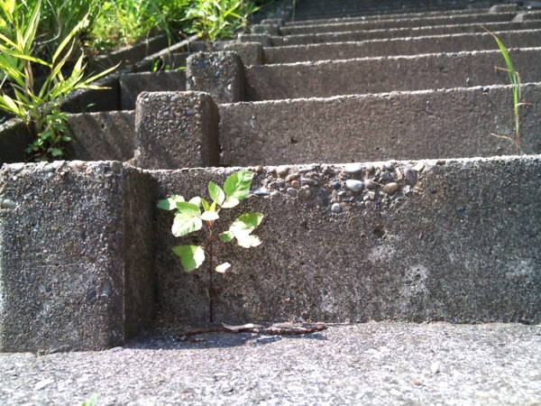 Plant on the stair