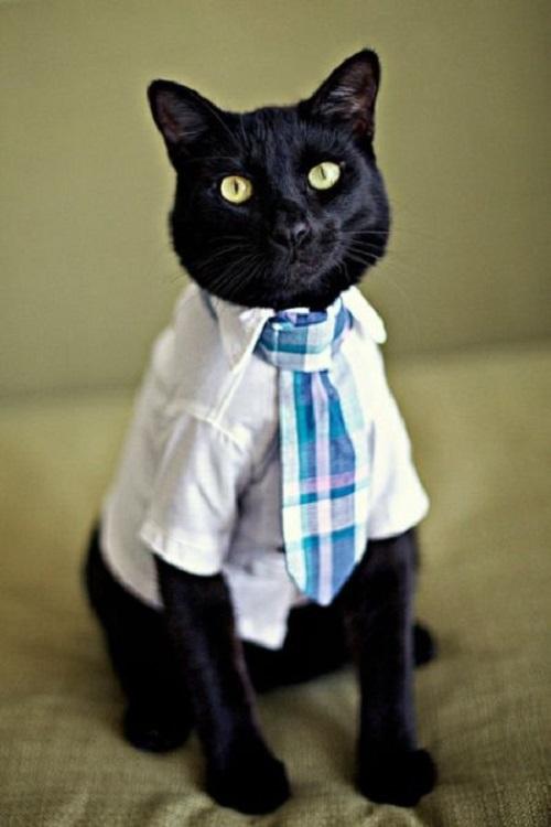 кот в рубашке (1)
