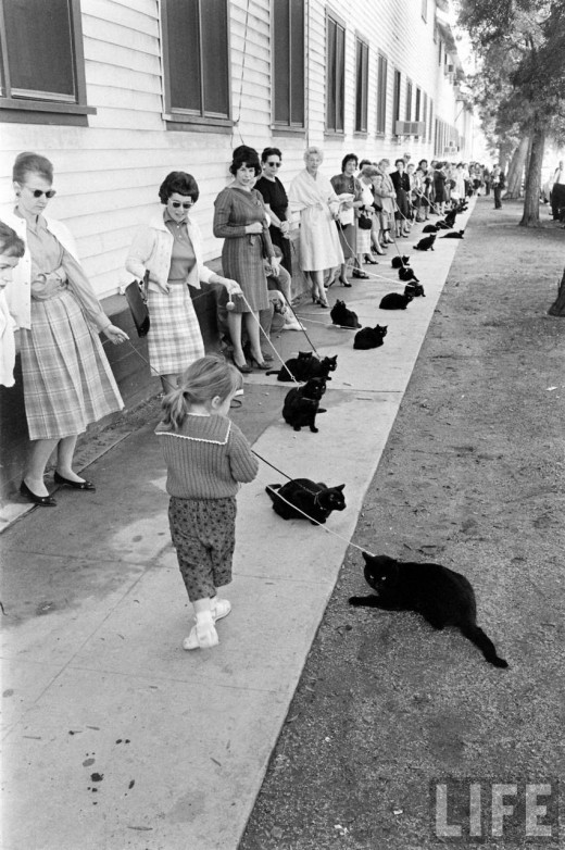 Black Cat Auditions In Hollywood, 1961 (3)