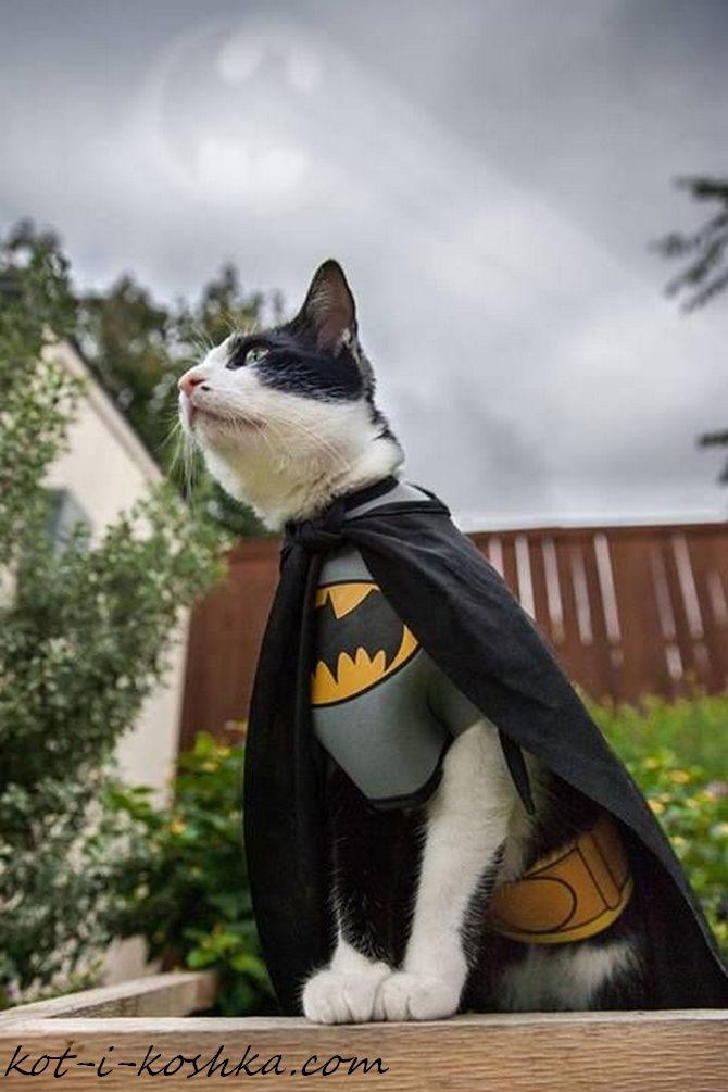 кот бэтмен (2)