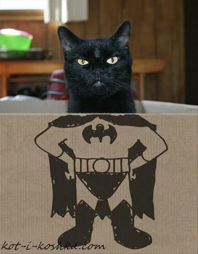 кот бэтмен (5)