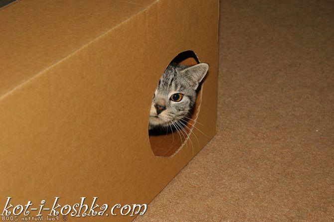 домик для кота (4)