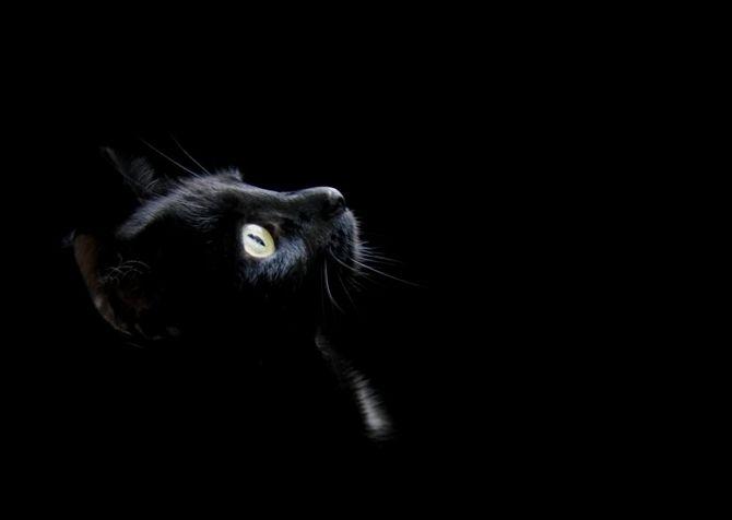 имена для чёрных котов (1)