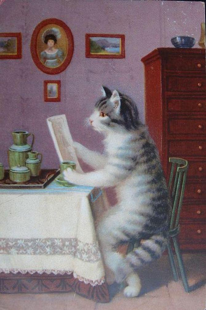 читающий кот (12)