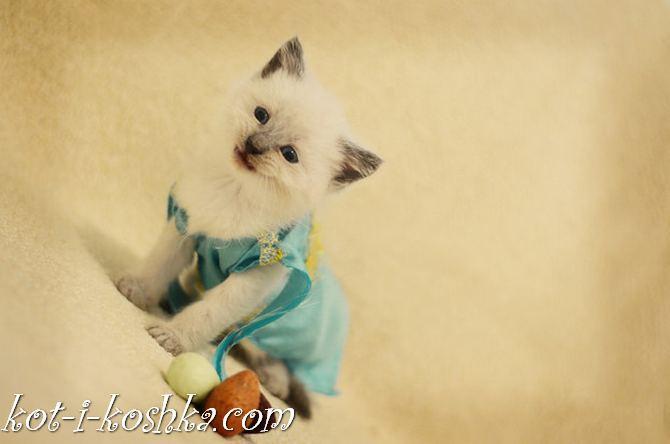 коты в костюмах (11)