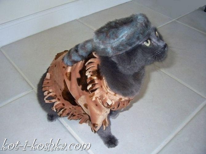 коты в костюмах (12)