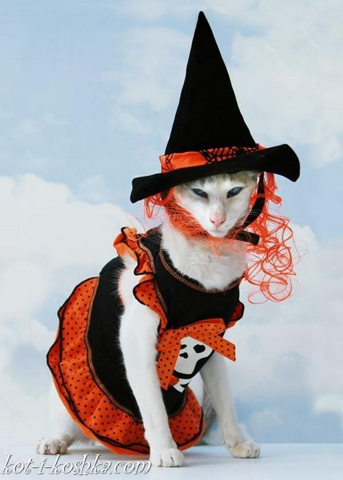 коты в костюмах (2)