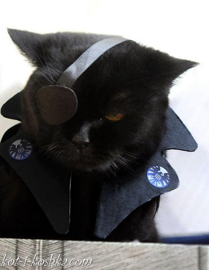 коты в костюмах (21)