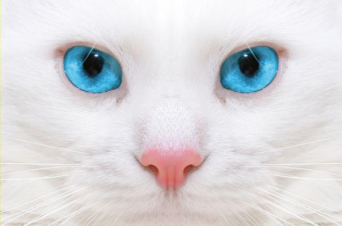 имена для белых котов (3)