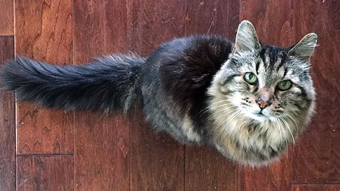 самый старый кот (2)