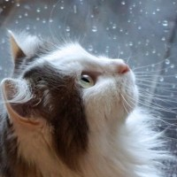 Эрнест Хемингуэй «Кошка под дождем»