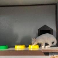 Коты Ташкента под охраной ГУВД