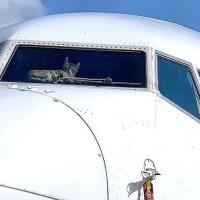 В Израиле кот прожил две недели в самолете