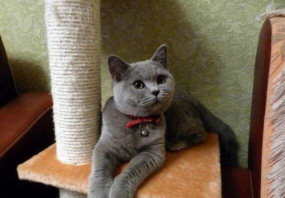Как приучить котенка к новым хозяевам. Полезные советы о том, как приучить котенка к новому дому. Что делать с подобранным уличным котенком