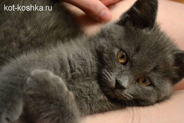 Признаки гельминтозов у кошек симптомы и лечение глистов. У кошки в кале белые червяки Маленькие белые червячки в кале у кота