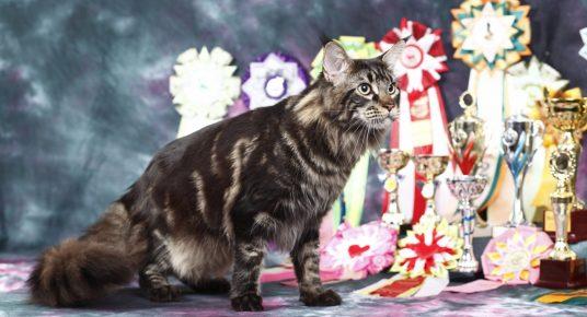 CAT cu medalii