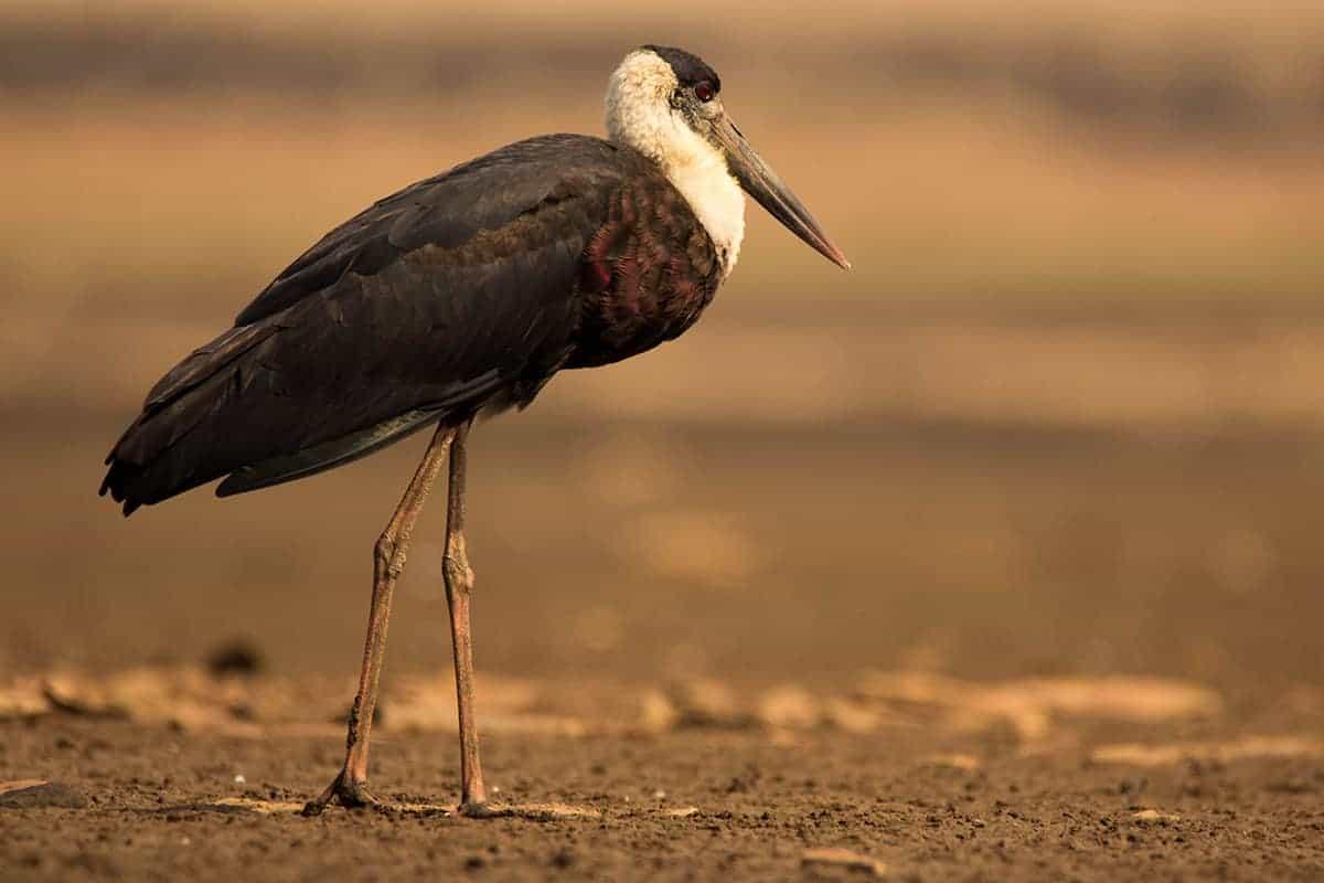 Bird Watching at Aalniya