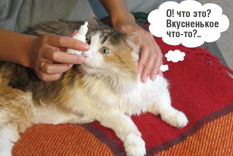 Грибковый отит или отомикоз у кошек причины симптомы лечение