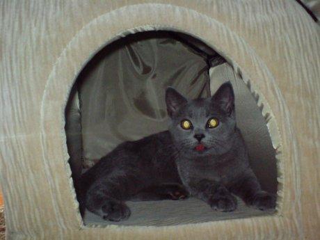 Инстинкт самосохранения заставляет кошек прятаться в домиках