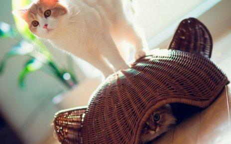 Каждому животному необходимо укрытие
