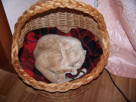 Кошке как и человеку нужно личное пространство