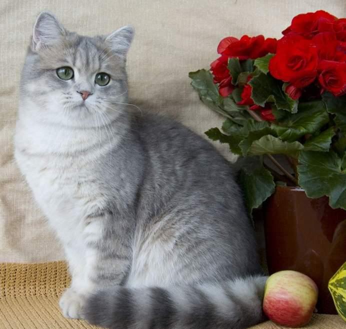 Разные характеры домашних котов.