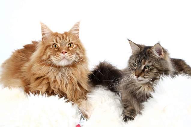 Рацион питания кошки: как правильно подобрать.