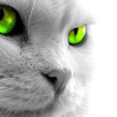 Нервная система кошки: как она устроена?