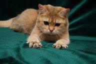 Когти - главное оружие кошек