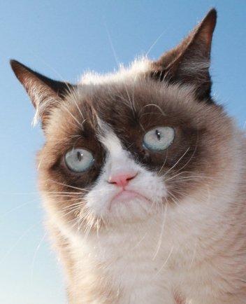 У любой кошки должны быть зоркие глазки