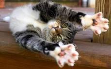 Котенок проявляя свои инстинкты царапает обои
