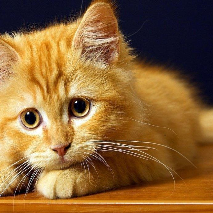 Животное испытывает дискомфорт при появлении глистов