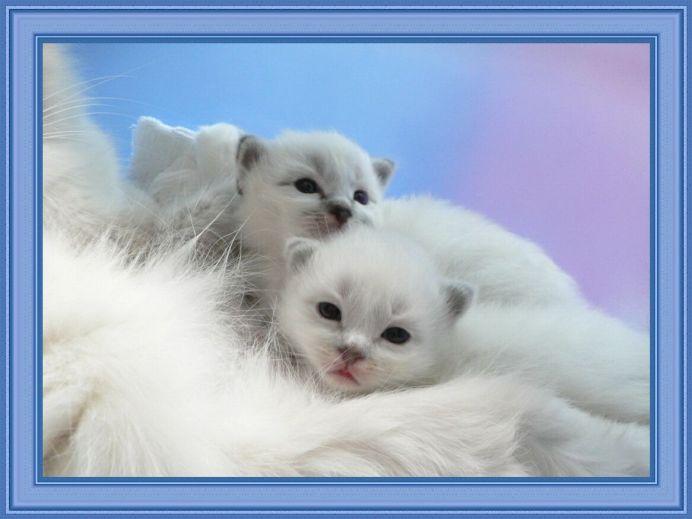Кошка беспокойно себя ведет перед началом родов