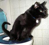Выбор наполнителя влияет на приучение котенка к туалету