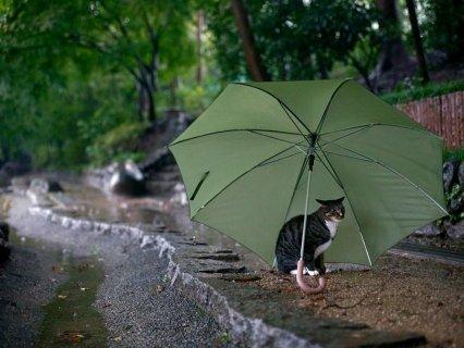 Боязнь воды у кошек на уровне инстинктов