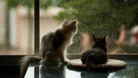 Промокшая кошка может простудиться