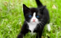 Кошка может стать настоящим другом