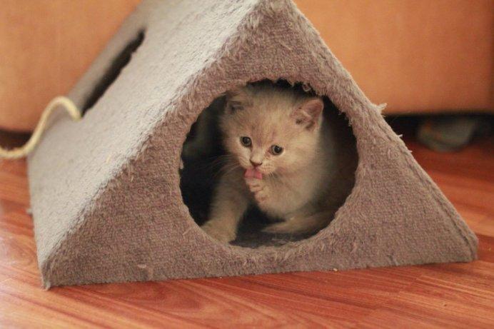 Приобретите для малыша уютный домик