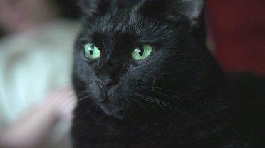 Черная кошечка с красивыми зелеными глазами