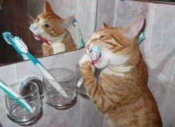 Кошкам не нужны зубы для жевания