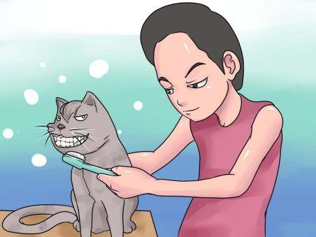 Кошка, как и человек, нуждается в периодической чистке зубов