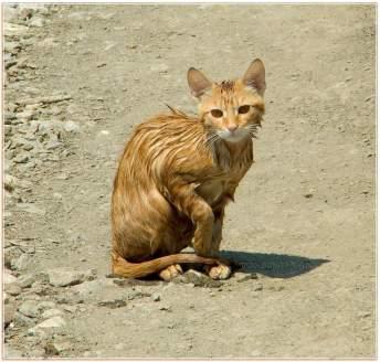 Жестокий мир людей или история об одном бездомном коте.